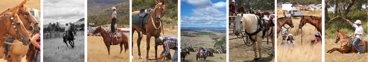 Tasmanian Mountain Cattlemen's